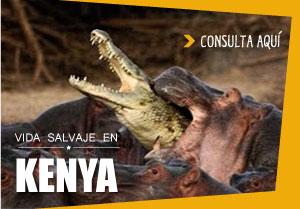 viajar a africa, kenya