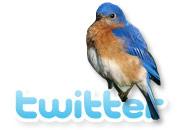 twitter nelson mochilero